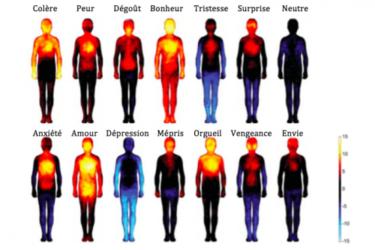 les parties du corps touchées par les émotions